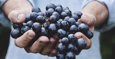 dieta-de-las-uvas